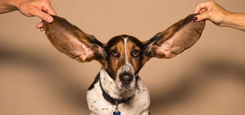 Wie unser Gehör uns geistig fit hält: Gastbeitrag bei Die Ratgeber